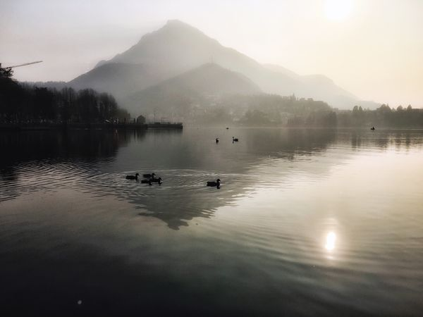 Afternoon in Lecco. Travel Outdoors Mountain Nature Beauty In Nature Water Animal Themes Lake Reflection Animals In The Wild Fog Birds Swimming Idyllic Landscape Walking Around Eye4photography  EyeEm Nature Lover From My Point Of View in Brianza
