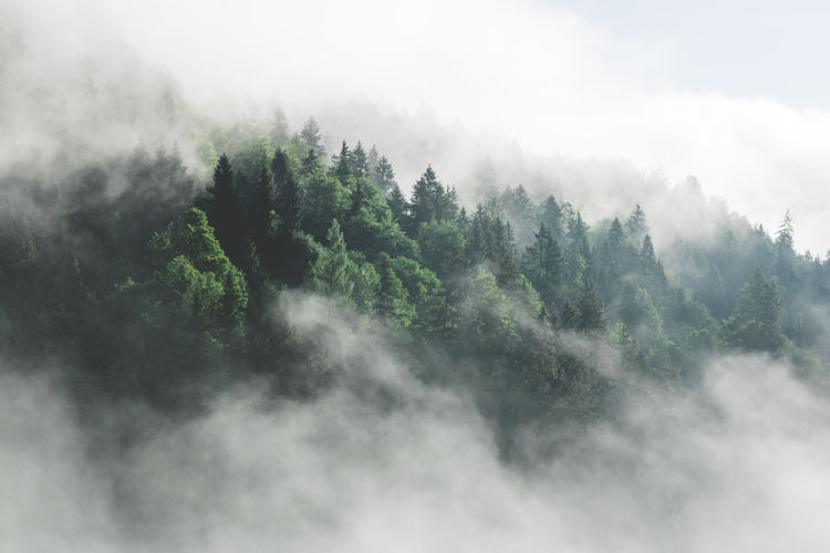 Clouds in forest. Calm scenery. My Best Photo Tree Fog Plant Scenics - Nature Beauty In Nature Tranquility Tranquil Scene Sky No People Cloud - Sky Nature Day Non-urban Scene Forest Mountain Environment Outdoors Land Coniferous Tree Idyllic Landscape