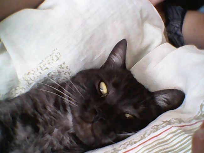 Selfie My Cat Pets