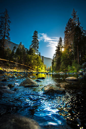 Babbling Brook Beauty In Nature Blue Dreamy Flowing Idyllic Nature No People Non-urban Scene Outdoors Reflection River Scenics Sky Stones & Water Stones And Pebbles Stream Sunny Tourism Tranquil Scene Tranquility Tree Yosemite National Park