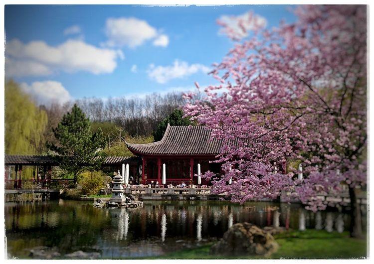 Unterwegs in den Gärten Der Welt Chinesegarden Springtime Teahouse Frühlingserwachen PrettyInPink