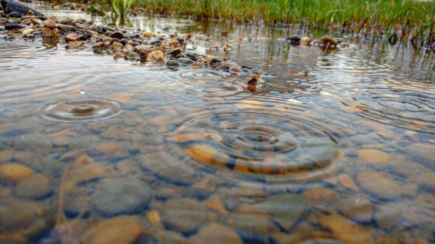 Water Waterfront Rippled Shallow Nature Purity Photography Photographer Outdoor Tranquility Water Surface Scenics Tranquil Scene Raindrops Rainingoutside Rain Outdoor Photography Nature Photography Beauty Surface Level Water Ripple