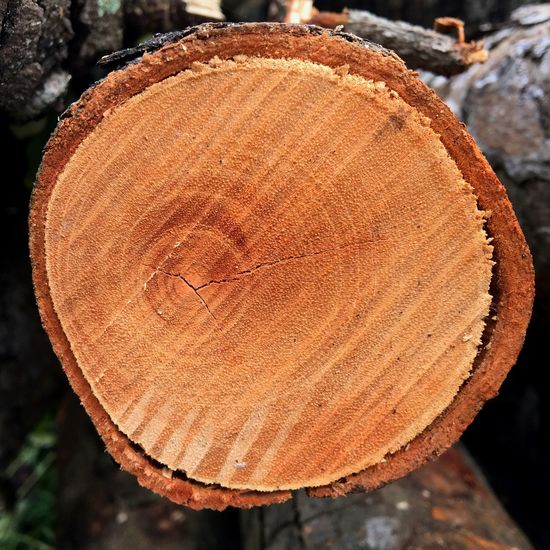Newly cut tree in Singapore Nature Botany Detail Texture wood Tree Log tree rings Environment grain Brown Singapore