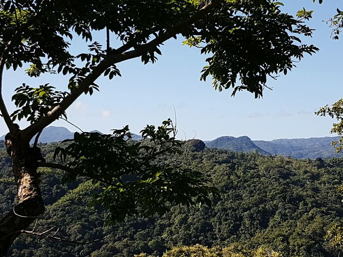 Mountain Nature Mountain Range No People Day Outdoors Landscape Beauty In Nature Tree Area Sky Tree