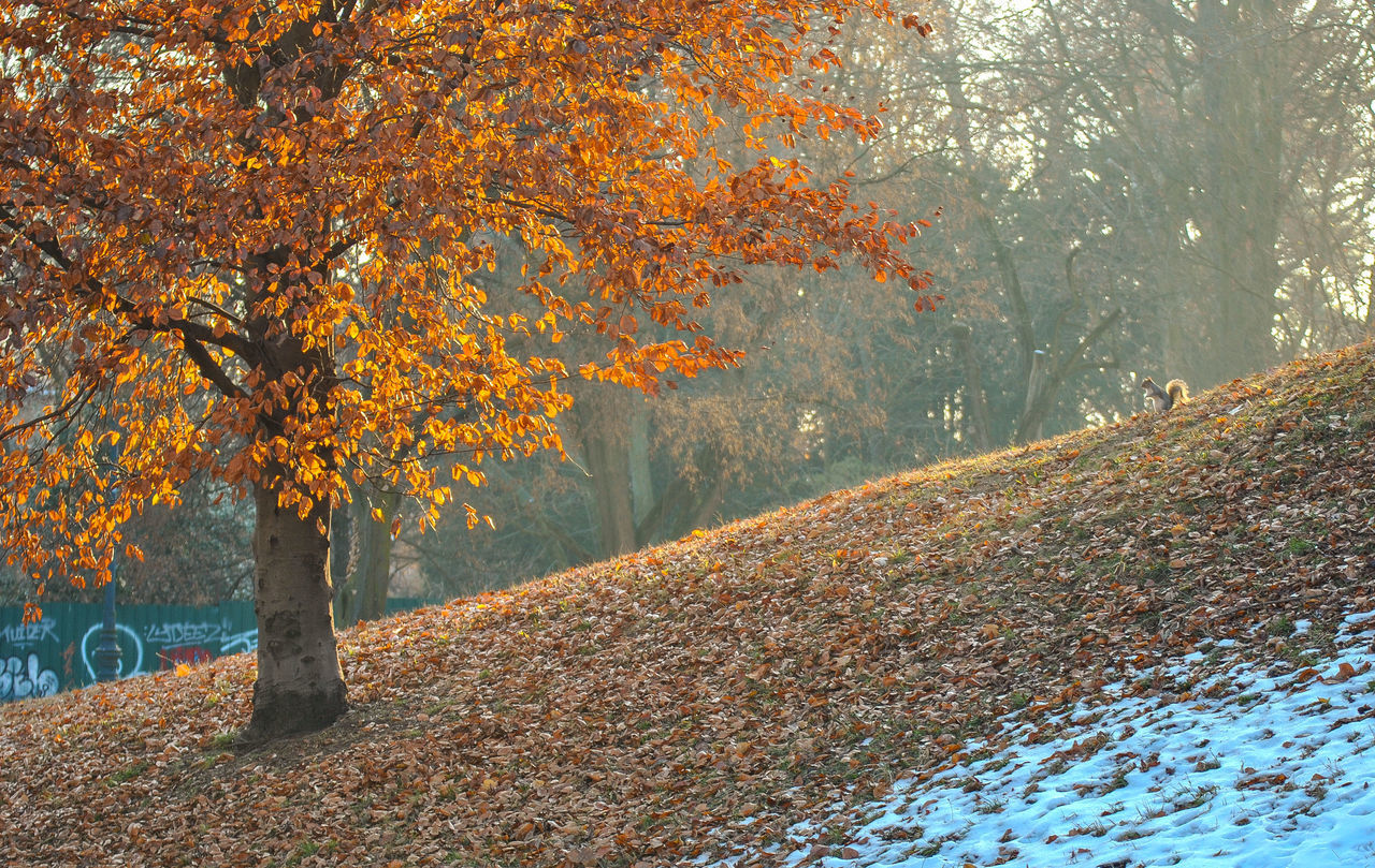 autumn, tree, change, plant, beauty in nature, orange color, nature, leaf, plant part, day, land, tranquility, scenics - nature, forest, no people, growth, outdoors, tranquil scene, autumn collection, tree trunk, fall, natural condition