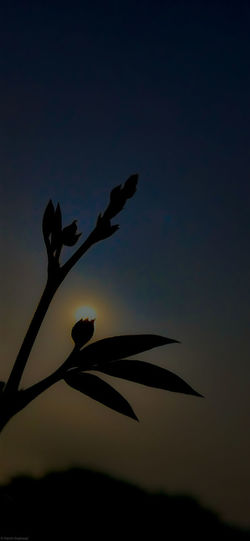 Low angle view of silhouette plant against sky at dusk