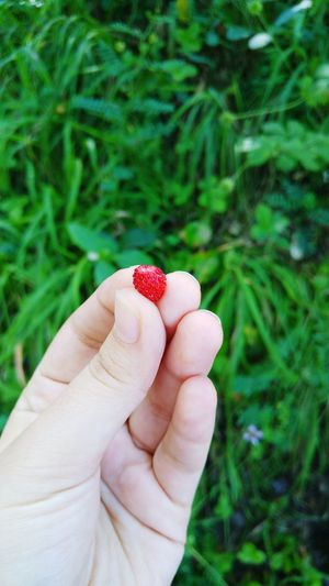 Close-up of hand holding tiny strawberry against field