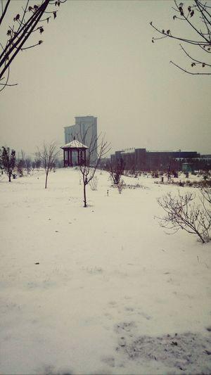 大雪初至,别样风景。