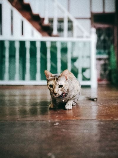 Portrait of cat sitting on floor at home
