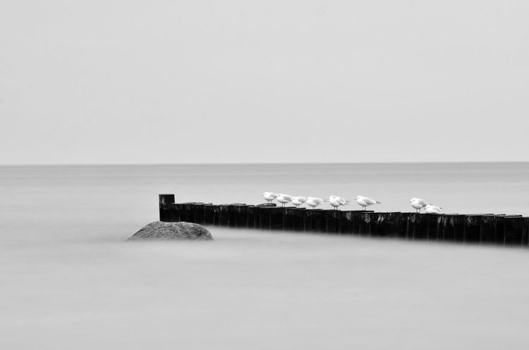 Baltic Sea Baltic Sea Nature Baltic Sea Winter Beach Beach Still Life Beauty In Nature Clear Sky Day Hoffi99 Horizon Over Water Long Exposure Nature No People Outdoors Scenics Sea Seagull Seagulls And Sea Sky Tranquil Scene Tranquility Water