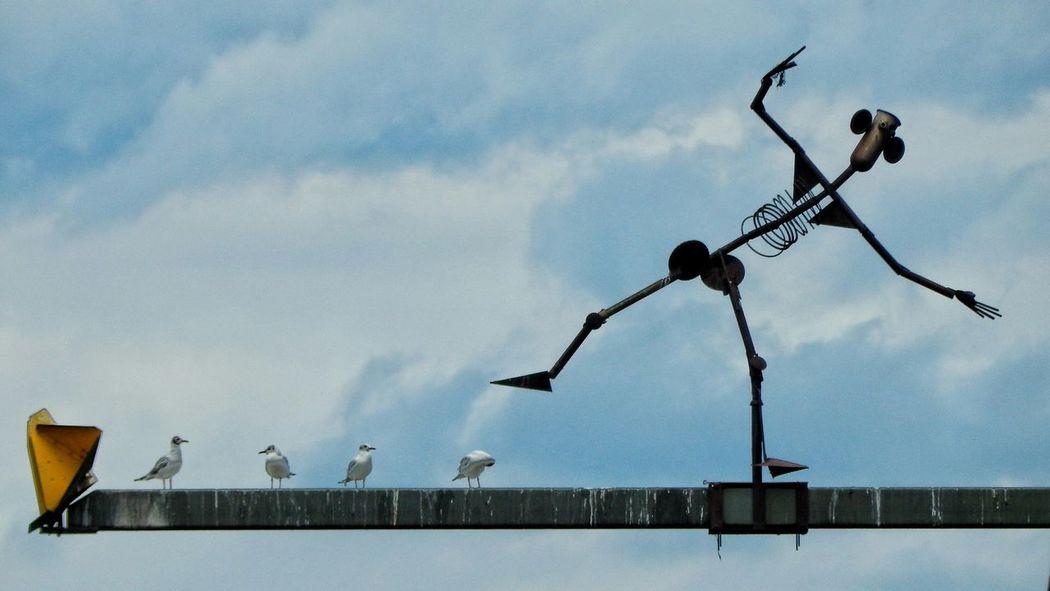 Hohenzollernbrücke Skulptur Bridge Sculpture Metal Sculpture Funny Stuff Birds Cologne Bridge Köln Eye4photography