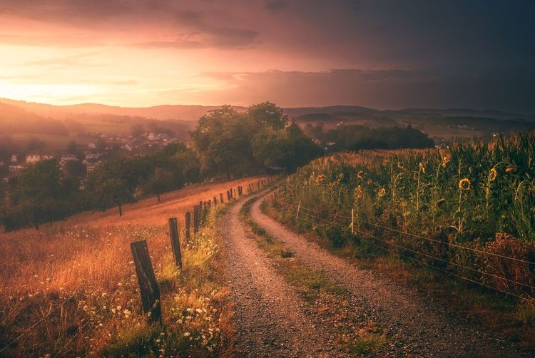 Summer Rain Scenics - Nature Landscape Beauty In Nature Sky Environment Plant Tranquil Scene Tranquility Agriculture Rural Scene Growth Cloud - Sky Field Sunset Land Nature Tree No People Orange Color Vineyard