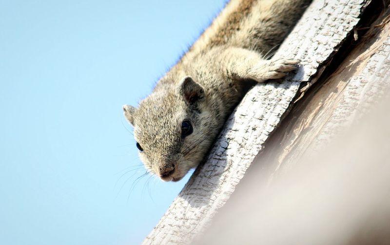 Little Squirrel Squirrel Closeup Sqirrels Squirrel Photo Squirrel Photography Squirrel Life Portrait Close-up Animal Mouth Animal Skin Animal Eye