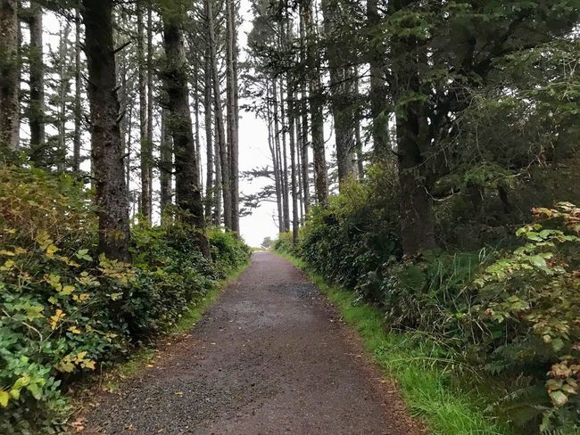 Forest path leading to the ocean Cape Disappointment State Park Tree Nature The Way Forward Forest Growth Tranquil Scene Beauty In Nature No People Sky Branch Landscape Plant Green Color Tranquility Day Outdoors Scenics Tree Trunk