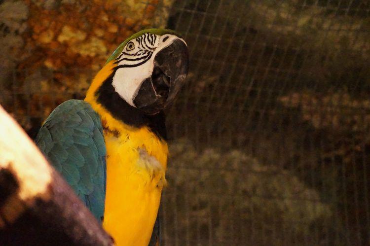 EyeEm Birds Colour Of Life 2016 Juni Niklas BYOPaper! The Week On EyeEm Perspectives On Nature