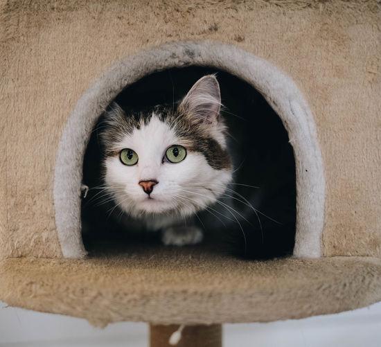 Kitty! Cat
