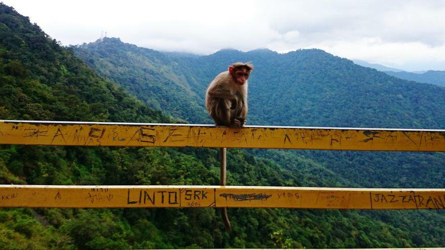 Monkey on railing against mountains