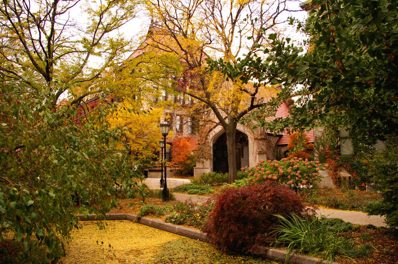Trees and plants in garden during autumn