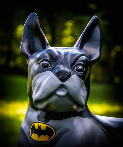 Looking At Camera Dog Portrait Pets Close-up Outdoors Day Decoration Superdog Garden Collector Tadda Community From Where I Stand Fake Art