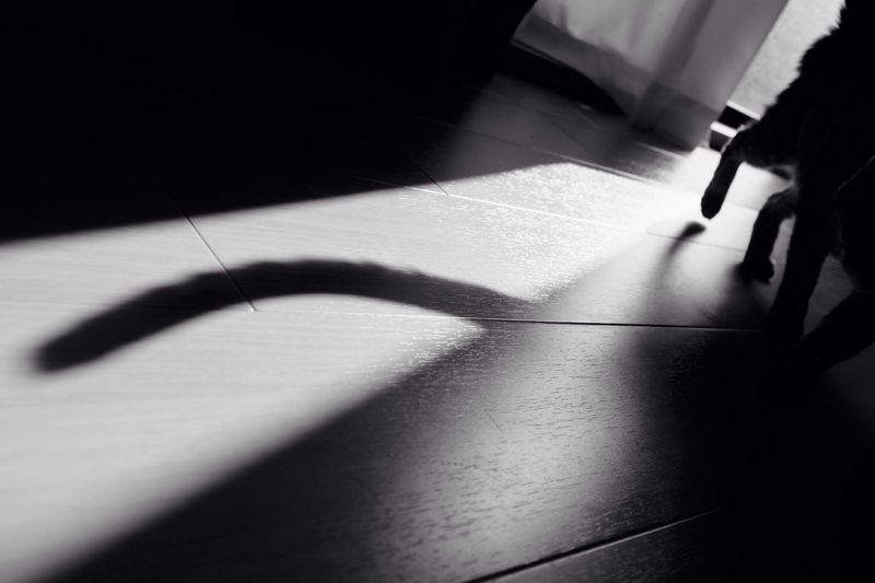 Blackandwhite Monochrome Light And Shadow Cat