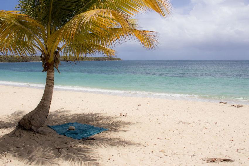 Beach Blue Ocean Palm Palm Tree Paradise Towel Vacation Vieques