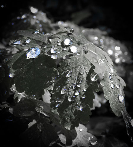 Waterdrops Beauty In Nature Close-up Fragility Freshness Nature No People Outdoors Plant Water