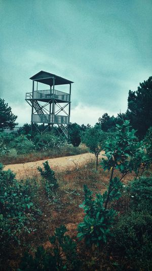 Tree Sky Outdoors Day Low Angle View Built Structure Architecture No People Growth Nature Water Tower - Storage Tank Water Sand