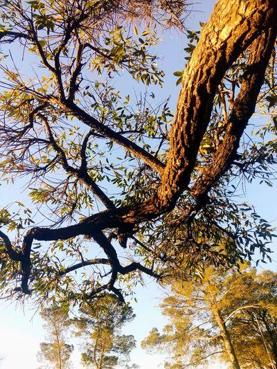 Tree EyeEmNewHere Tree Sky