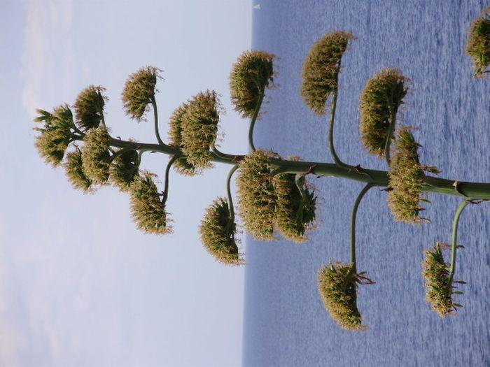 Island Island Hvar Nature Plant Sky Travel Destinations Tree Wild Nature