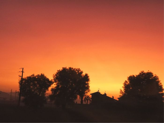 Dawn Orange Color Sunset Tree Silhouette No People Nature Beauty In Nature Architecture Clear Sky Outdoors Growth Sky Building Exterior Day First Eyeem Photo