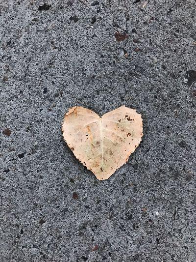 Fall Leaf Love