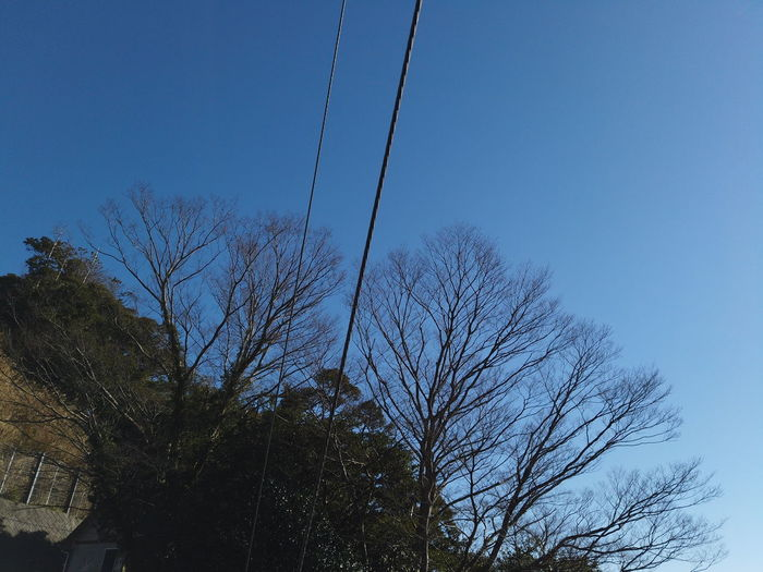 Abstract Mountain Trees Green Color Green Nature Looking Up Tree Plant Sky Cable No People Blue Low Angle View Electricity  Power Line  Day Clear Sky Bare Tree Outdoors Connection Beauty In Nature Technology Growth Copy Space Electricity Pylon Power Supply Telephone Line