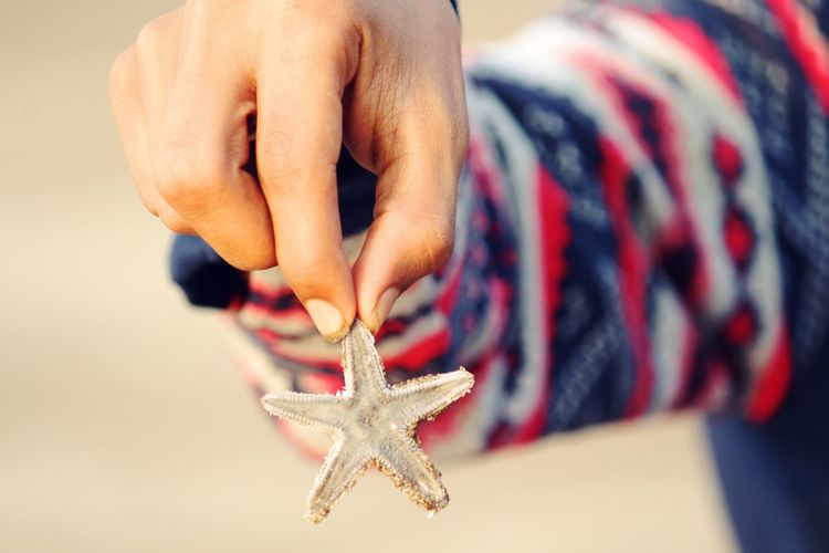 Cropped Image Of Person Holding Star Fish