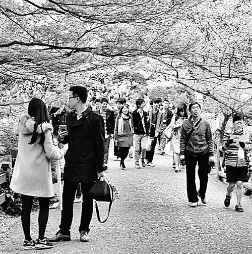 Shinjuku Gyoen National Garden Visitors Spring 2015 Sakura Tokyo, Japan Travel Photography Black & White