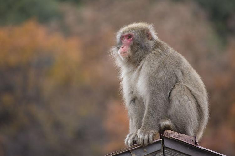 Close-up of monkey sitting on metal