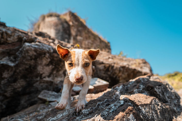 Portrait of puppy on rock