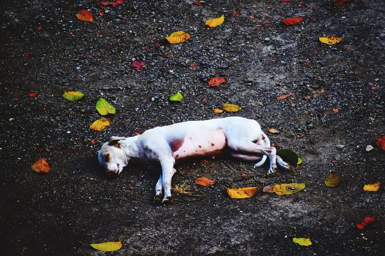 Sleeping beauty 🐶 EyeEm Animal Lover EyeEm Selects EyeEmNewHere EyeEm Best Shots EyeEm One Animal Animal Themes Domestic Animals High Angle View Outdoors Pets No People Day Mammal Dog Nature