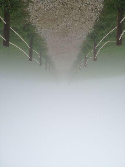 Samyang Farm Foggy Morning Hello World Hi! Taking Photos Travel Early Morning Nikon D50