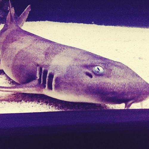 Hello there, little fella Sharks Shark Eye Aquarium At Home Aquarium Life Cute
