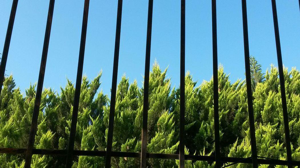 Trees Nature Calm Morning Latakia  Syria