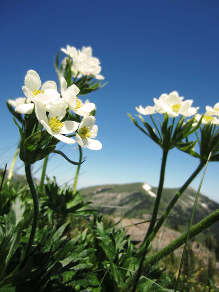 Beauty In Nature Clear Sky Close-up Flower Flower Head Flowering Plant Freshness Growth Outdoors Petal
