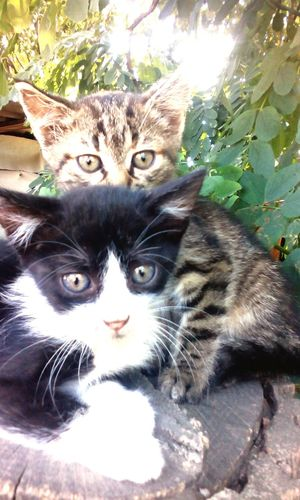 cat tree animals pets Colour Of Life
