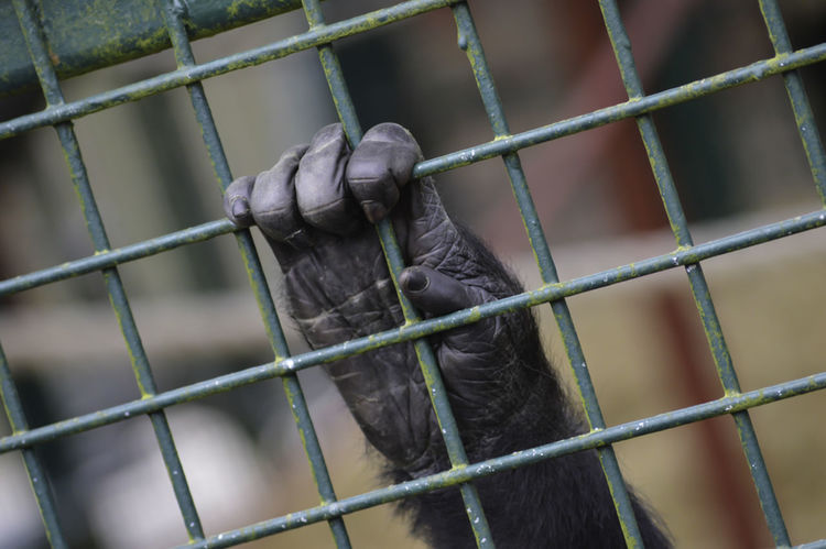 Monkey hand Monkey Monkey Hand Animal Animal Photography Photography Colourful Animal Love Caged :( Detailed Palm Hand Detail Showcase: February