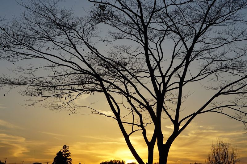 Hugging A Tree Sunset Branch Tree Nature Scenics Silhouette Outdoors Tranquility Landscape Autumn Leaf Dusk Sky And Clouds EyeEm Nature Lover