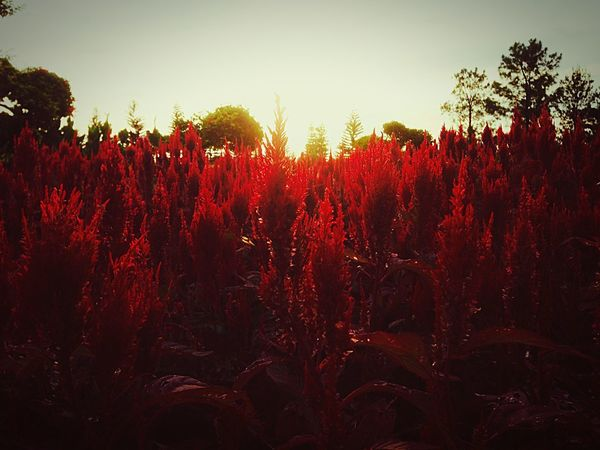 the atmosphere in the flower garden Beauty In Nature Red Growth Sky Nature Environment Flowering Plant Tranquil Scene EyeEmNewHere EyeEmNewHere This Is Queer EyeEmNewHere