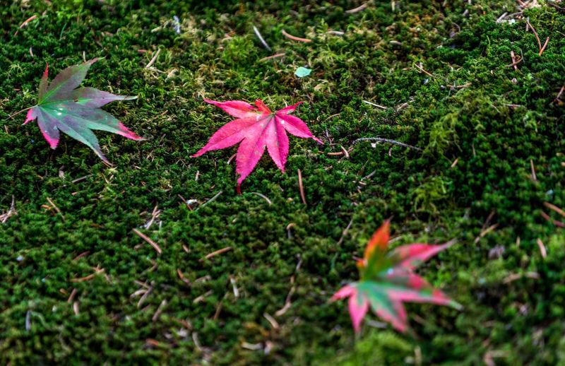 Grass Beauty In