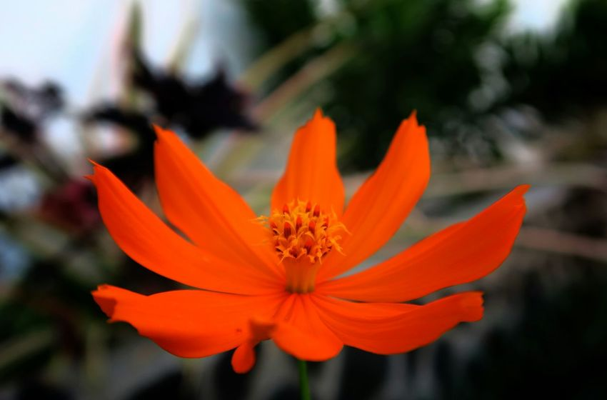 For the love orange North Lombok My Flower My Flowers Collection Showcase May