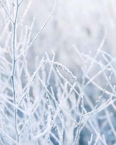 Frozen Plants During Winter