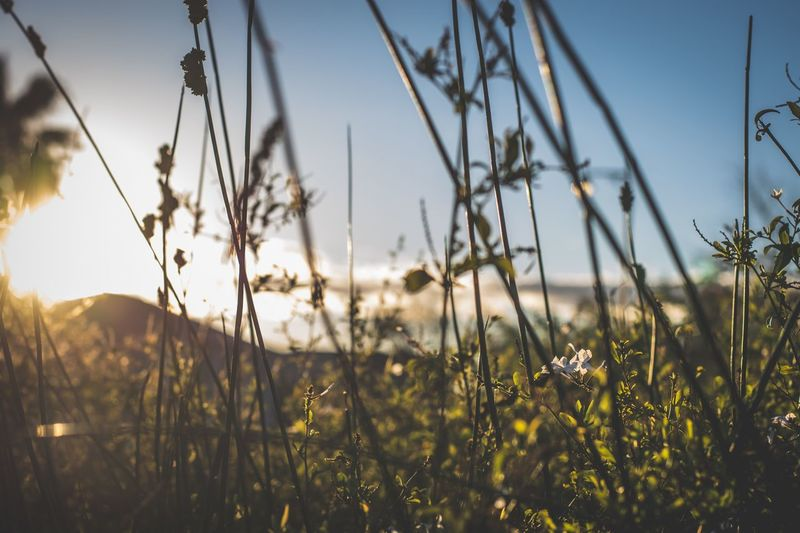 Sommergefühle Nature Field Outdoors Beauty In Nature Sunlight Close-up Sunset Field Travel South Africa Capetown