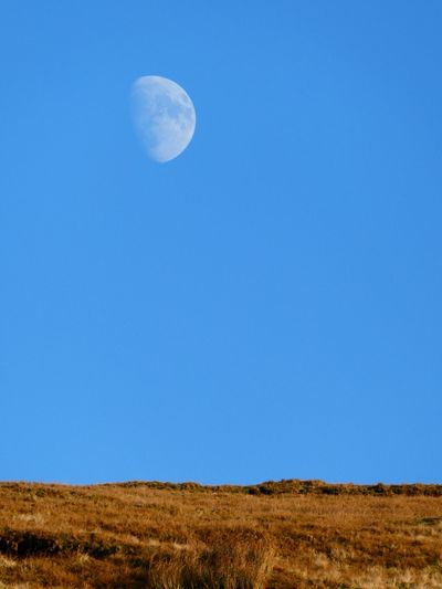 Scenic View Of Moon In Field Against Clear Blue Sky